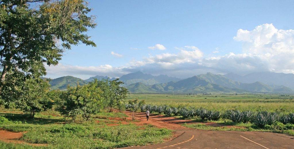 Sisal plantage in Tanzania